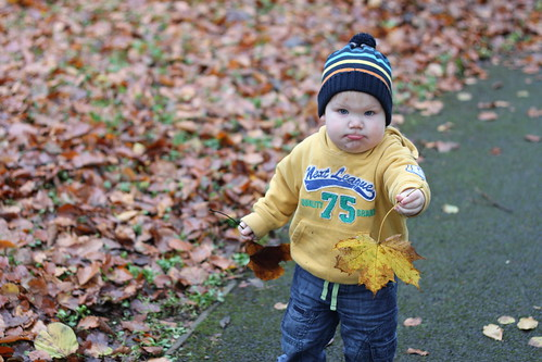 Playing with Leaves 3