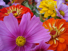 The Amazing Colors of Fall! (Clara Hinton) Tags: flowers red orange macro fall nature yellow purple blooms fantasticflowers fantasticflower clarahinton tastethecolours theamazingcolorsoffall