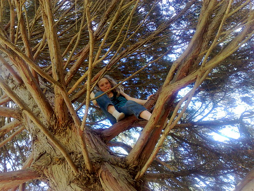 Caitlin in a tree