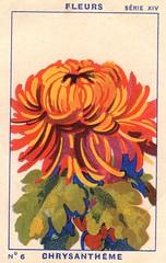 milliat fleurs004