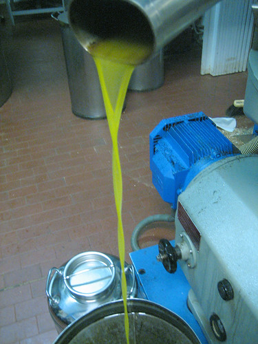 Olive Oil_Frantoio 069