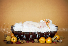 Happy Thanksgiving! (Heidi Hope) Tags: ri autumn sleeping orange baby holiday fall texture fur pumpkin ma rust warm basket massachusetts newengland rhodeisland newborn apples portraitstudio portraitphotographer babyphotographer newbornportrait maternityphotographer newbornphotographer massachusettsphotographer rhodeislandphotographer heidihopephotography newbornstudio newbornportraitphotographer heidihope httpwwwheidihopecom httpwwwheidihopeblogspotcom babystudio florabellatextures wwwheidihopecom