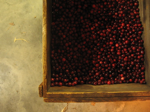 fresh local cranberries