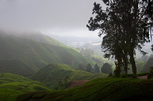 Cameron Highlands 09