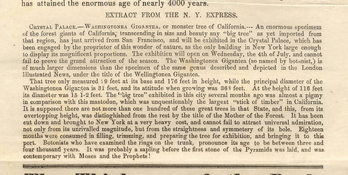 Mammoth-tree excerpt