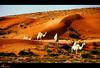 ــــــ جَمـال الجِمـــال ـــــــ (ANOODONNA) Tags: canon desert camel camels 40d alrasheed alanood العنود الرشيد flickrunitedaward anoodonna