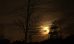 Full Moon Rising (gatorgalpics) Tags: night dark darkness fullmoon handheld firstimage shakennotstirred slightlycropped straightoutofcamera d5000 bigmoonrising lotsofshake fullmooneve