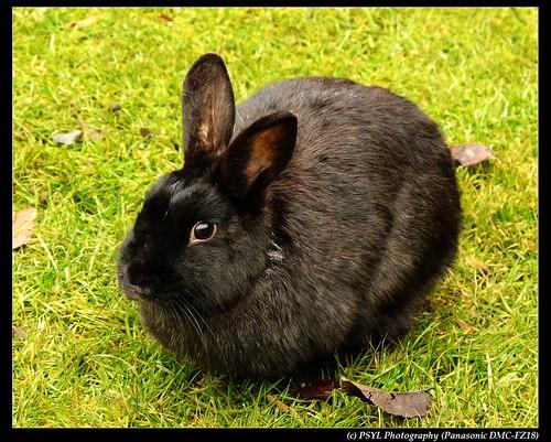 Feral Bunny