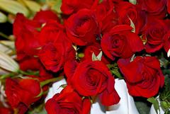 Brilliant Bellagio Reds (taminsea) Tags: vegas flowers red roses flower hotel lasvegas nevada may bellagio brilliant 2011 taminsea