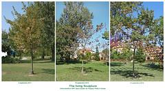 """Difesa della Natura"" de Joseph Beuys (Thetis, Arsenal de Venise)"