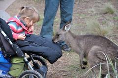 小女孩與袋鼠