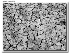 Hot Summer of 2006 P7010261 (Trevor Durritt) Tags: summer england blackwhite dry drought grayscale greyscale trevordurrittlrps