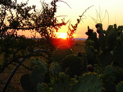 Prickly Sunset (Texas to Mexico) Tags: sunset cactus colors beauty silhouette texas sundown july pricklypear lonestarstate knippa