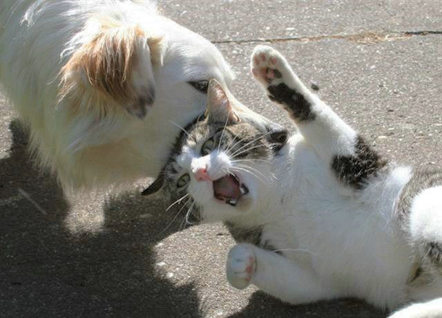 cats&dogs_16