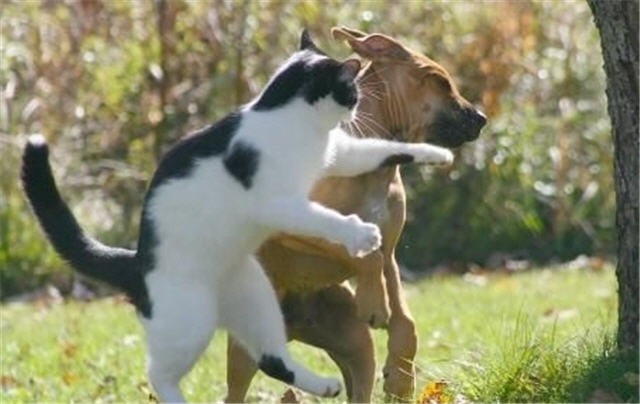 cats&dogs_30