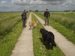 Treffen2 (manopet) Tags: dog collie hund mano meldorf torja