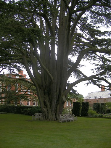 Old Tree - Cottesbrooke Hall