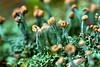 Strange Paradise (Uncle Phooey) Tags: blue brown macro green mushroom strange closeup turquoise explore fungus greenish blueish spores conservationarea deepforest fruitingbodies strangeparadise unclephooey cedargap
