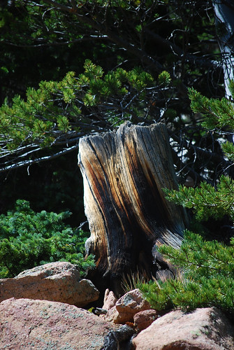 Tree_Trunk[2009]