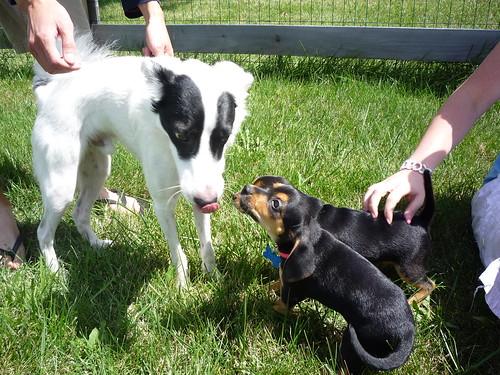 Beth's puppies! 006
