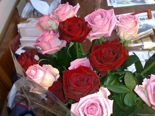 Photo: Rose (general)