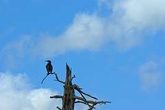 Lonesome Bird (Jo Odins) Tags: bird clumberpark