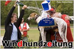 FCI EM 2009 - Greyhound -  Sieger: Fenomen Co Co, CZ