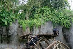 IMG_7973 (dantasdesign) Tags: brazil brasil sãopaulo zoológico paulo são cidades sopaulo zoolgico