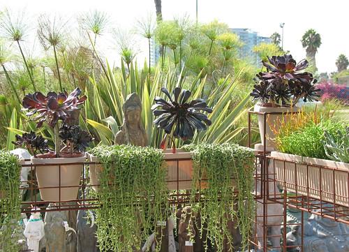 succulents, papyrus, phormium