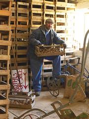 Jersey farmer sorting Jersey Royals