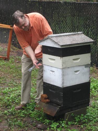 Learning the anatomy of a bee hive