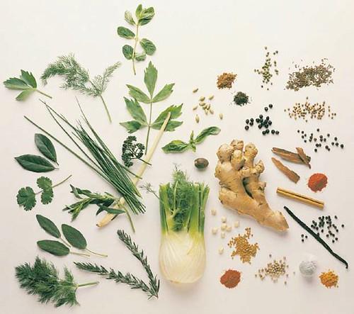 medicinal_herbs_guide by ayurvedicherbs