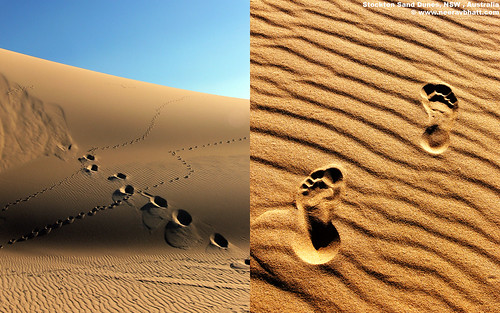free 1680x1050 resolution desktop wallpaper photo of Footprints and Journeys in Stockton Sand Dunes