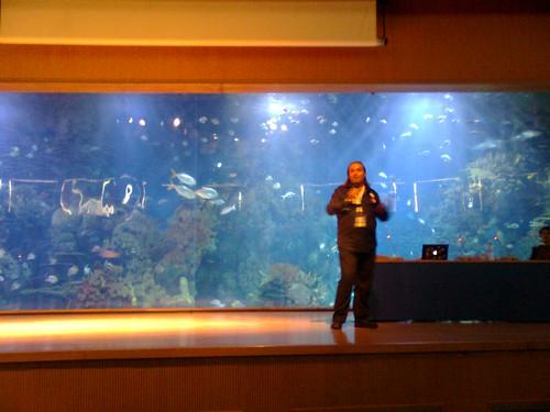oceanografic valencia search congress seo posicionamiento dominios