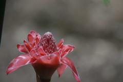 Barbadosstlucia 332 (lenoralsg) Tags: ocean flowers mountains forest garden barbados lightening stlucia tropicalbarbadosstlucia