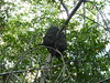 An anteater nest.