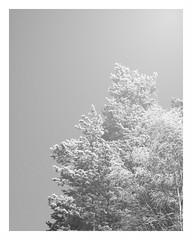 We miss the sun, we miss the snow (pasipasi) Tags: winter february 2009 pentaxk20d