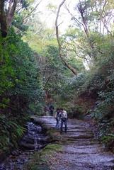 091121 天園ハイキングコース01