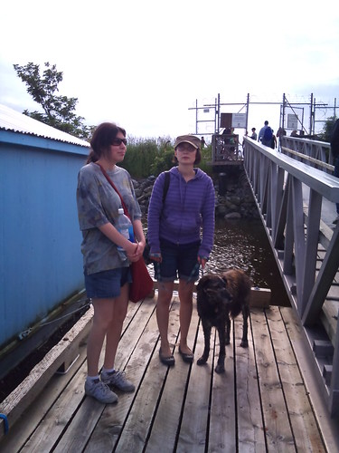 Pekoe, being a good dog on the docks.