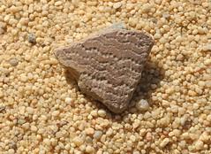 Chad Tibesti NE (ursulazrich) Tags: tschad chad tchad ciad tibesti desert keramik shards pottery scherben dottedwavyline