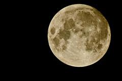Full Moon (Max Hendel) Tags: moon full canoneosdigital Astrometrydotnet:status=failed Astrometrydotnet:id=alpha20090717717119 photobymaxhendel bymaxhendel fotografadopormaxhendel maxhendel photographedbymaxhendel pormaxhendel canoneosphoto photographermaxhendel