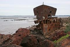Gayundah (jason nahrung) Tags: beach rust shipwreck redcliffe wreck barge gayundah