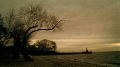 The Tree of the Death (photogra.fer) Tags: tree sunrise landscape death buenosaires cloudy musicvideo burton acasusso