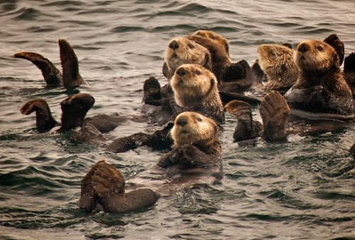 Sea Otters Up Close