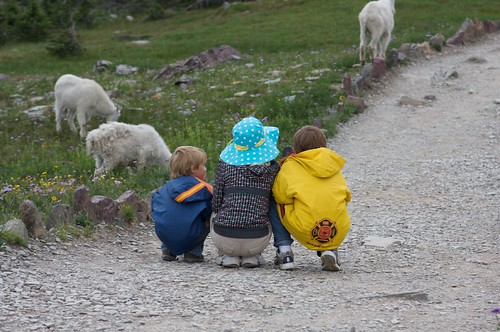 Mountain Goats -- Glacier National Park