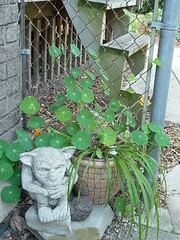Gargoyle with plants