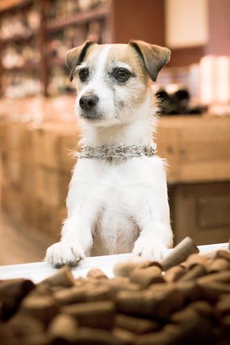 241/365 guard dog