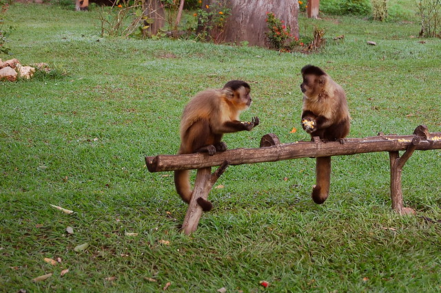Kigha and Jilt eating a banana