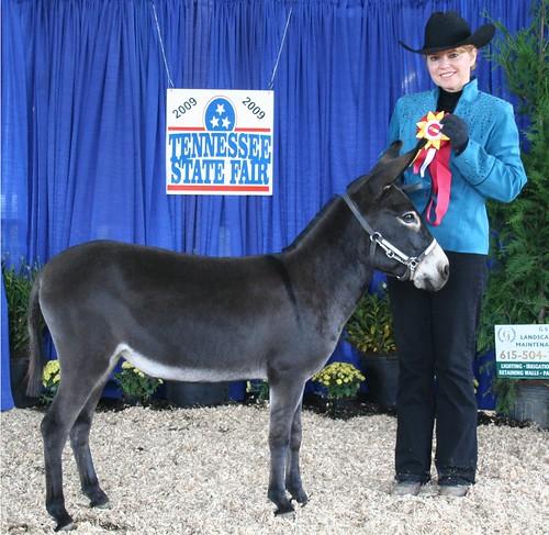Tennessee State Fair Grand Champion Miniature Donkey Jennet