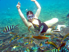 Redang Marine Park Underwater Shots (cscjanni) Tags: underwater malaysia redang marinepark
